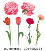 set of red  pink spring garden... | Shutterstock .eps vector #1069602185