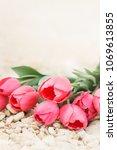 bouquet of big beautiful pink...   Shutterstock . vector #1069613855