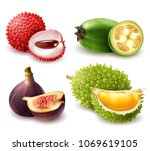 set of realistic exotic fruits... | Shutterstock .eps vector #1069619105