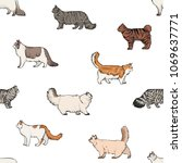 Seamless Pattern With Domestic...