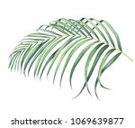 Tropical Palm Branch Isolated...
