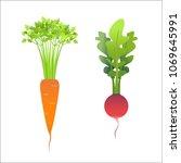 fresh carrots and radishes ... | Shutterstock .eps vector #1069645991
