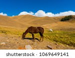 horses in the assy gorge...   Shutterstock . vector #1069649141