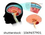 diagram illustrating... | Shutterstock .eps vector #1069657901