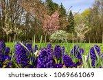spring flowers in bloom | Shutterstock . vector #1069661069