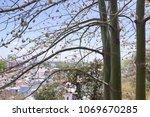 natural kapok trees  ceiba... | Shutterstock . vector #1069670285