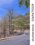 natural kapok trees  ceiba... | Shutterstock . vector #1069670339