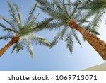 green palm tree leaves against... | Shutterstock . vector #1069713071