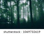 green woods background   Shutterstock . vector #1069732619