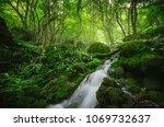forest river  green natural... | Shutterstock . vector #1069732637