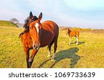 Stock photo mare and foal on spring field landscape horses on horse farm field 1069733639