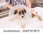 veterinarian checking up sick... | Shutterstock . vector #1069767875