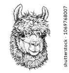 realistic sketch of lama alpaca ...   Shutterstock .eps vector #1069768007