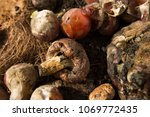 inside of a composting container | Shutterstock . vector #1069772435