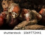 inside of a composting container | Shutterstock . vector #1069772441