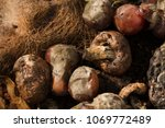 inside of a composting container | Shutterstock . vector #1069772489