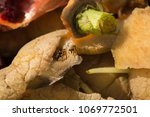 inside of a composting container | Shutterstock . vector #1069772501