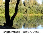 reflection of green trees in... | Shutterstock . vector #1069772951