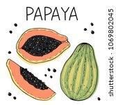 ripe papaya hand drawn vector...   Shutterstock .eps vector #1069802045