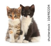 Stock photo two kitten sitting isolated on white 106982204