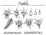 hand drawings fuchsia flowers.... | Shutterstock .eps vector #1069839761