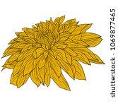 beautiful color sketch  dahlia... | Shutterstock .eps vector #1069877465