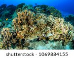 tropical fish and hard corals... | Shutterstock . vector #1069884155