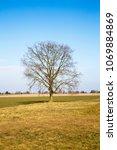 bare winter tree standing alone ... | Shutterstock . vector #1069884869