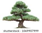 bonsai pine tree on white   Shutterstock . vector #1069907999