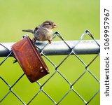 Wild Bird Gathers A Nut From A...