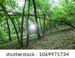 black locust forests tree  | Shutterstock . vector #1069971734