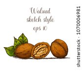 hand drawn walnut | Shutterstock .eps vector #1070006981
