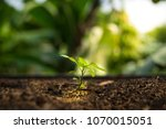 young plant in the morning with ... | Shutterstock . vector #1070015051