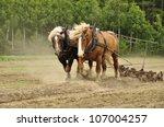 Working Horse With A Farm Fiel...