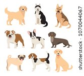 flat style dogs collection....   Shutterstock . vector #1070044067