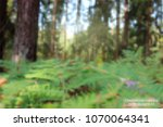 coniferous forest. abstract... | Shutterstock .eps vector #1070064341
