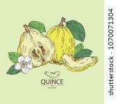 quince  fruit  leaves  flower... | Shutterstock .eps vector #1070071304