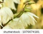 background of white... | Shutterstock . vector #1070074181