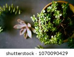 botanical nature background... | Shutterstock . vector #1070090429