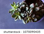 botanical nature background... | Shutterstock . vector #1070090435