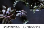 botanical nature background... | Shutterstock . vector #1070090441