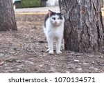 Small photo of homeless cat came out of the tree