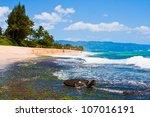 turtle enjoying the sunshine in ... | Shutterstock . vector #107016191