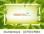 organic tea frame logo. green... | Shutterstock .eps vector #1070319881