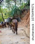 Small photo of Transporting gravel equine/mountain cargo