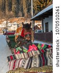 portrait of a sledge horse... | Shutterstock . vector #1070510261