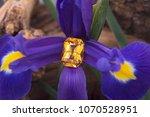 big emerald cut yellow sapphire ... | Shutterstock . vector #1070528951
