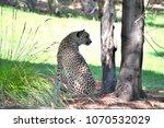 jamala zoo  canberra  australia ... | Shutterstock . vector #1070532029