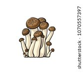 brown beech mushrooms icon.... | Shutterstock .eps vector #1070557397