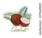 coconut  illustration. good for ... | Shutterstock .eps vector #1070669855